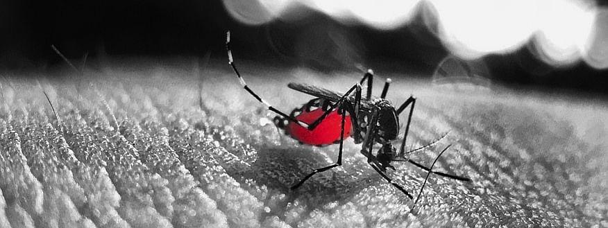 Aligarh Muslim University Issues Dengue Prevention Advisory