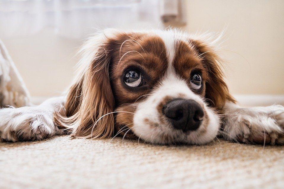 पालतू कुत्तों के भी होंगे 'स्वास्थ्य बीमा', अब आप भी दिखाइए इस वफादार के प्रति वफादारी