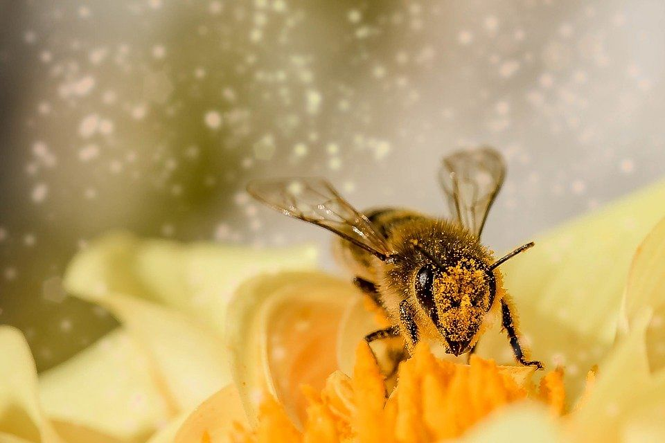 Honey Bee Venom Could Be Used To Treat Breast Cancer: Study