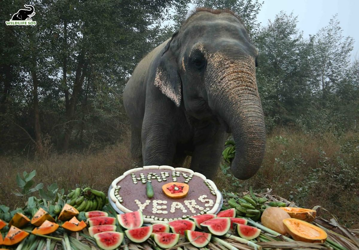 Rescued Elephants Celebrate Ten Years Of Freedom With Wildlife SOS