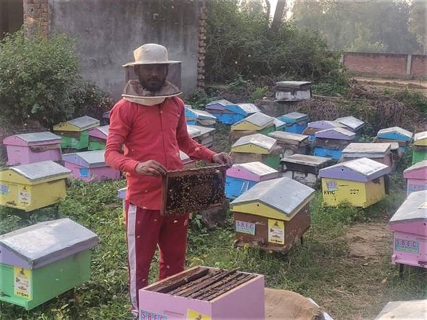 KVIC's Honey Mission Earns First Income For Migrant Workers In Uttar Pradesh