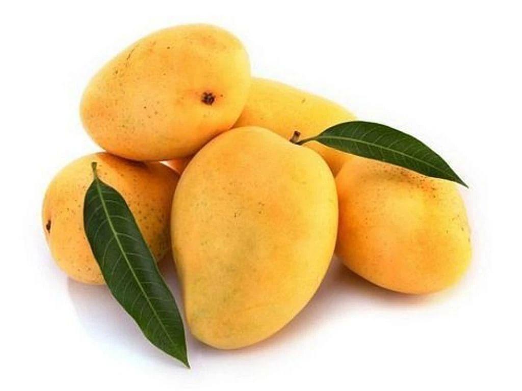 India Expands Mango Export Footprint, GI Certified Fazil Mangoes Shipped To Bahrain