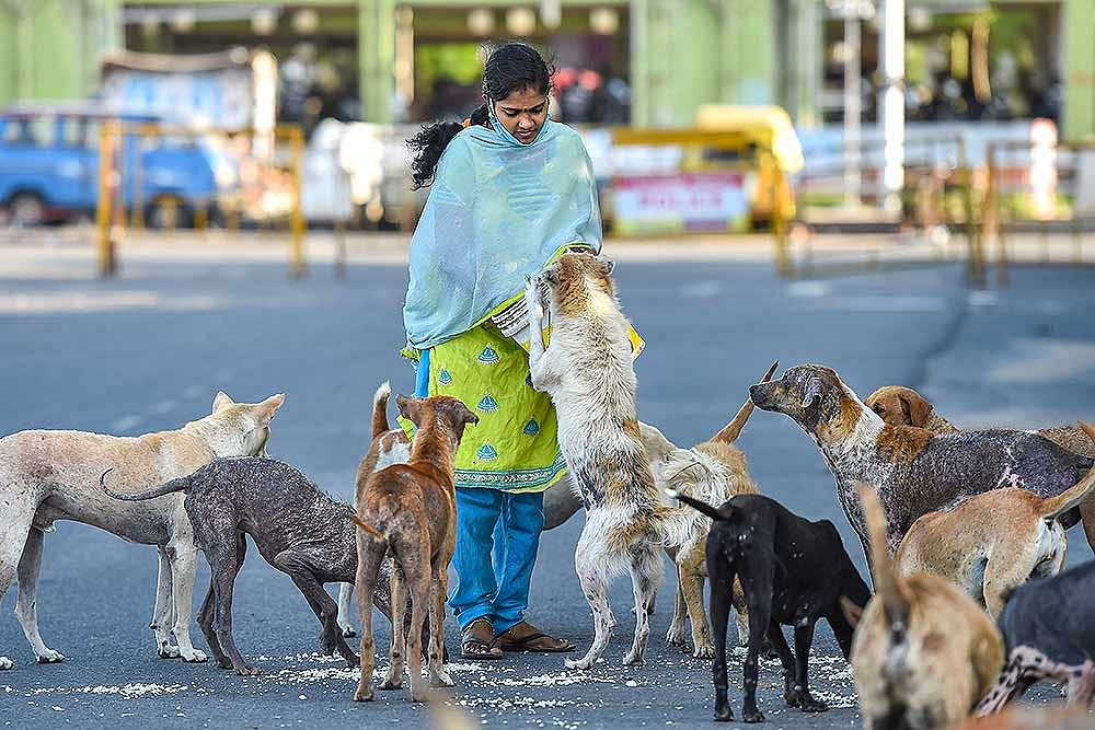 Delhi High Court Says: Street Dogs Have A Right To Food, Citizens To Feed Them But...