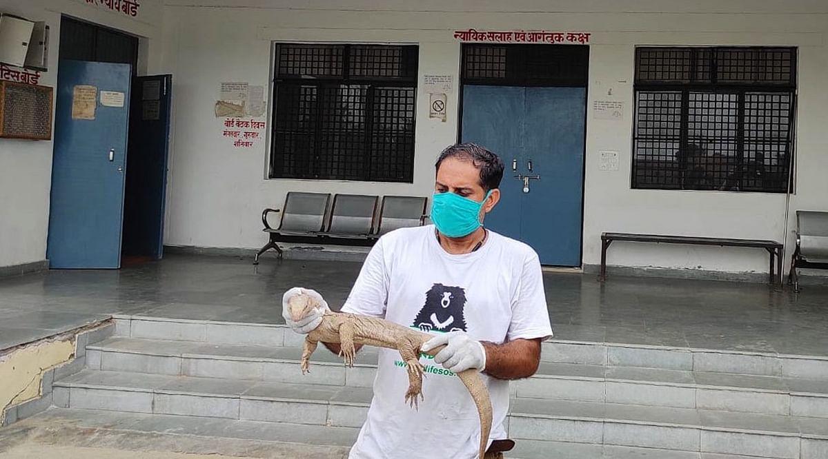 Massive Monitor Lizard 'Checks Into' Juvenile Justice Board In Agra