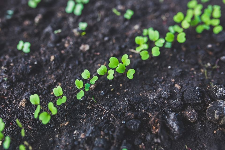 Meet Nature Warriors Planting Millions Of Saplings To Make India Greener, Healthier