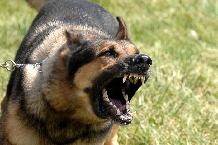 Six-Year-Old Dies After Guard Dog Of A Farm House In Kanpur Attacks Him, Father Lodges FIR
