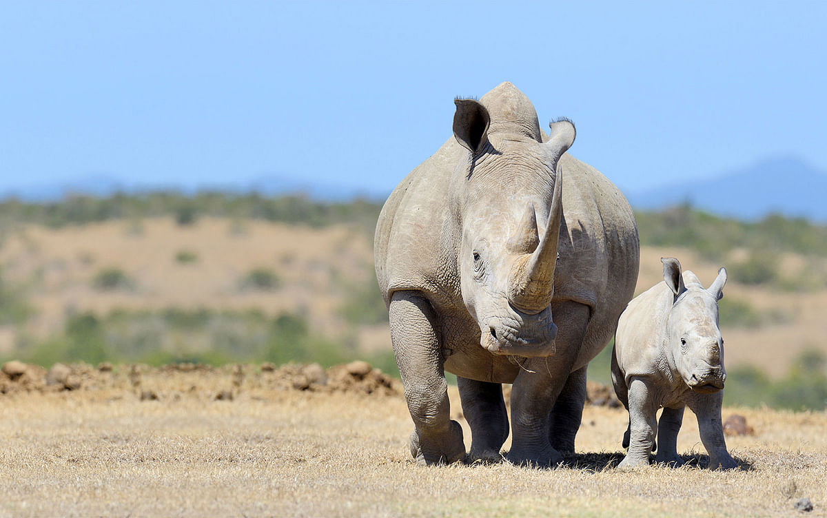 Big FM-Indian Oil Jointly Celebrate World Rhino Day
