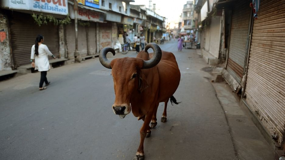 Cow Should Be Declared National Animal, Its Protection A Fundamental Right: Allahabad High Court