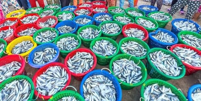 Fisheries Sector Gets A Big Boost Under The BJP Government In Uttar Pradesh