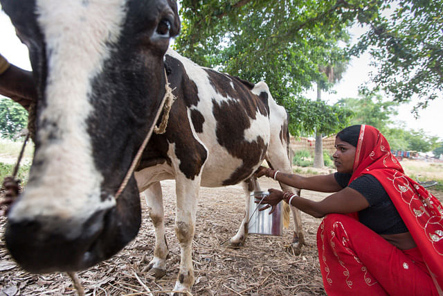 NCW Launches Country-Wide Training, Capacity Building Program For Women In Dairy Farming