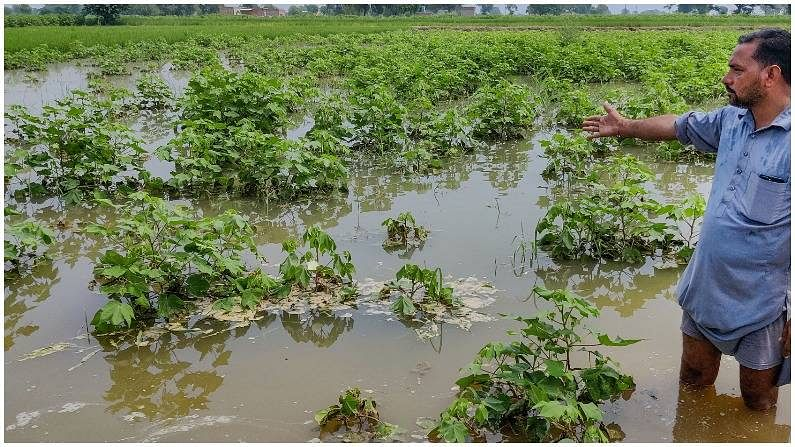 UP To Compensate Farmers For Crop Damaged Due To Rains