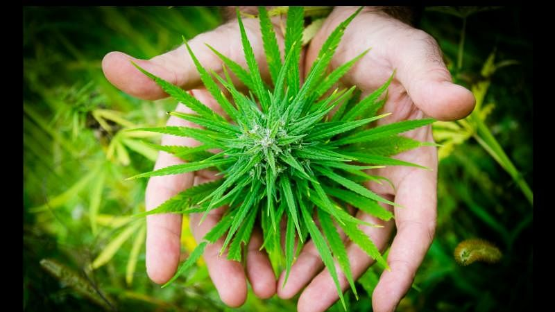 Can Medical Cannabis Help Autistic Kids?