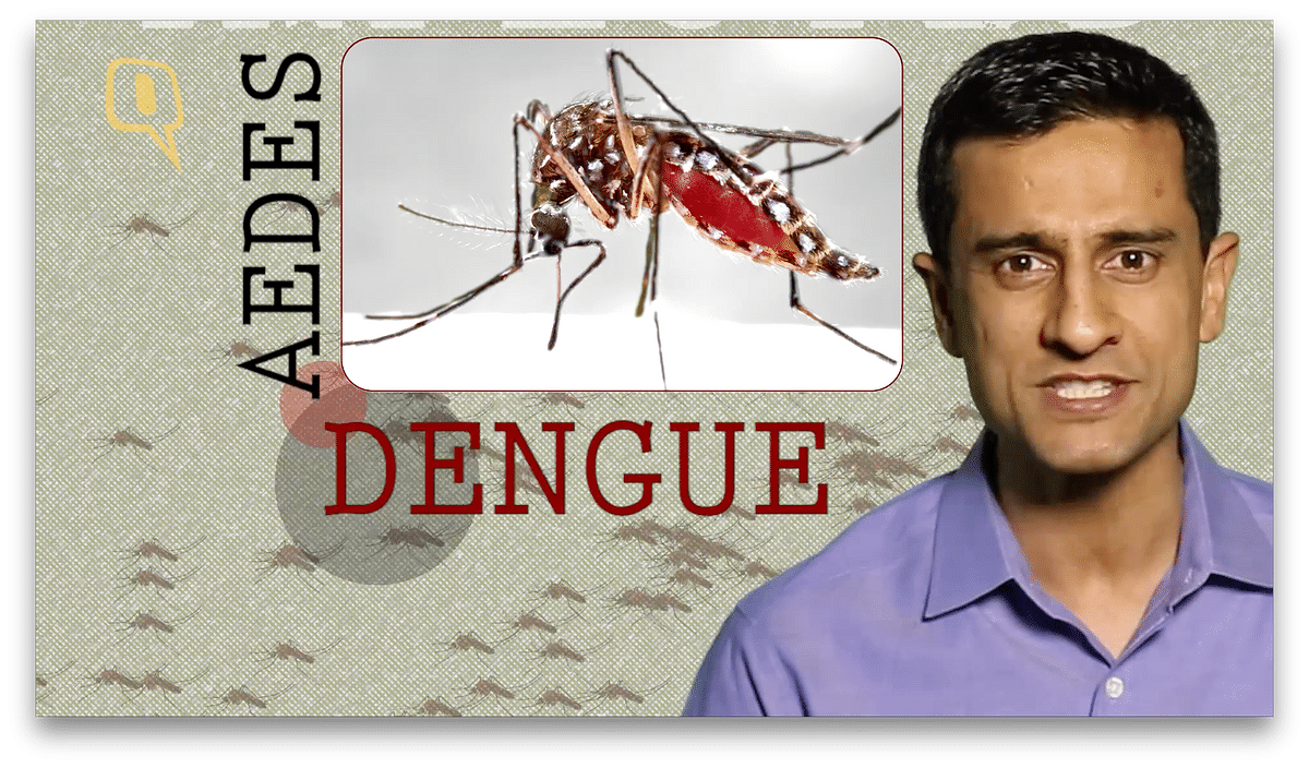 Spreads through the bite of an infected Aedes species mosquito.