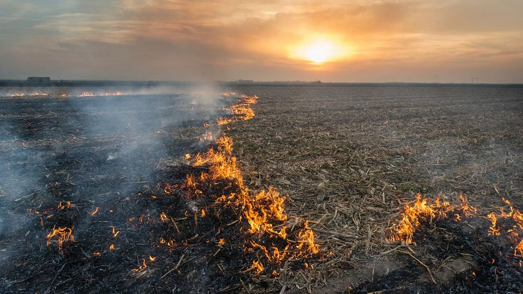 Straw stubble that remains after wheat and other grains have been harvested are set on fire which can be hazardous for the environment. (Photo: iStock)