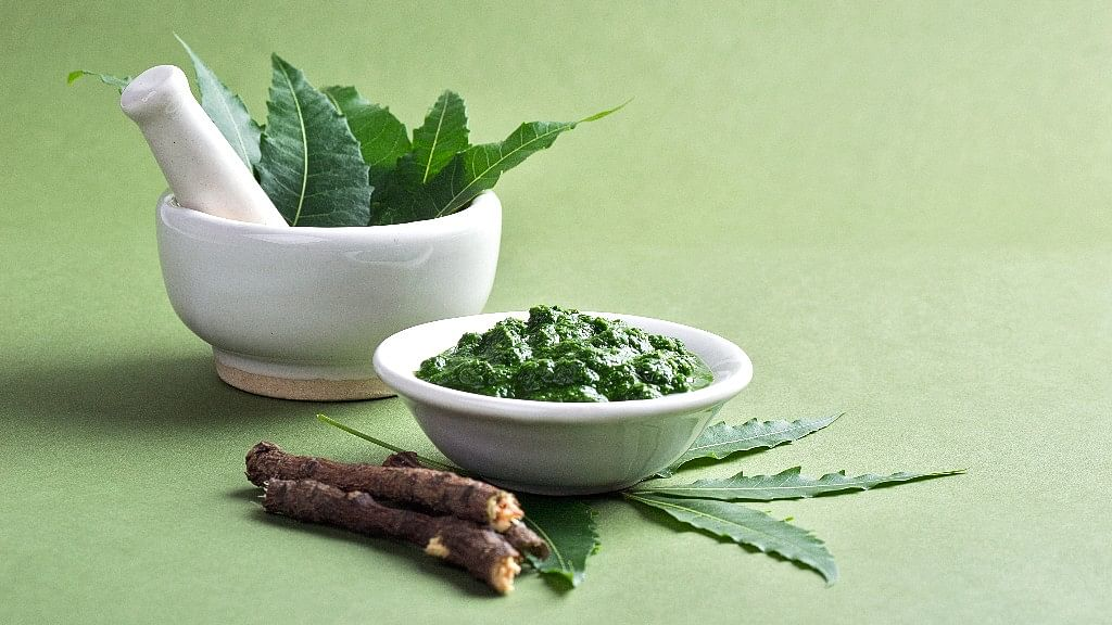Benefits of Neem, the Wonder Leaf That Keeps Diseases at Bay