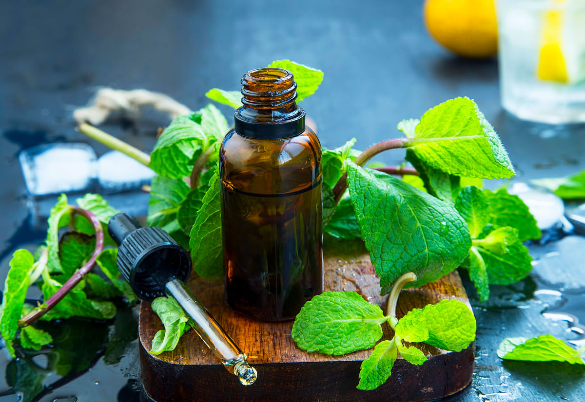 The essential oil of peppermint is known to be an excellent decongestant.