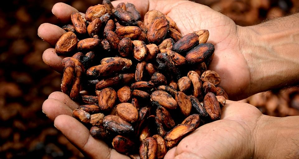 Cacao contains flavonols that improve blood flow and improve attention span.