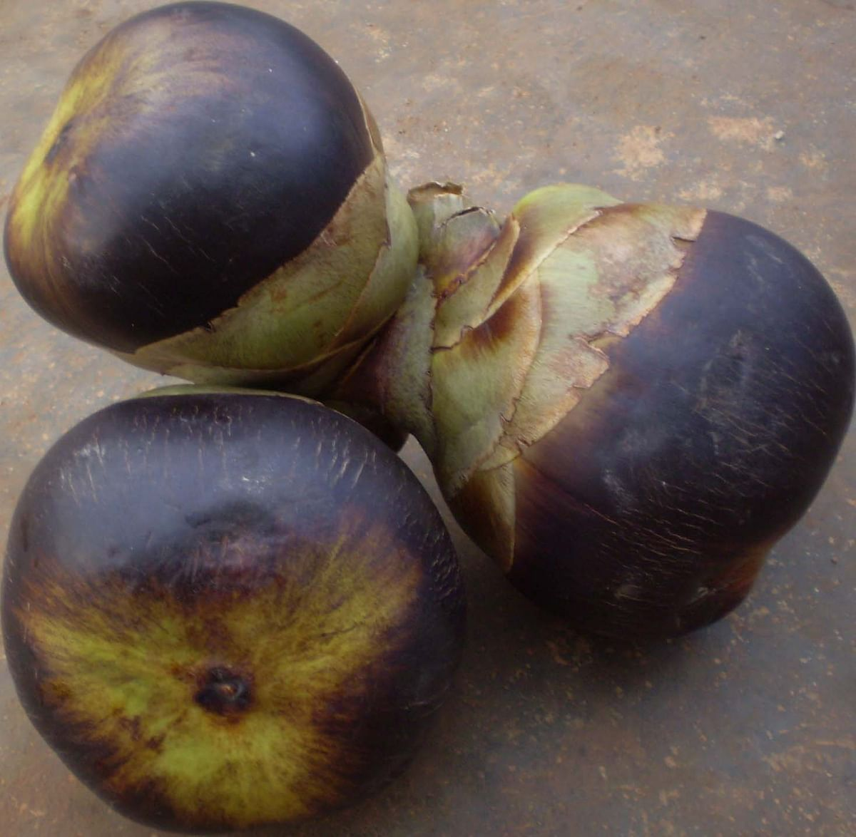 Ice apple is rich in Vitamin A, B and C, Iron and Zinc.