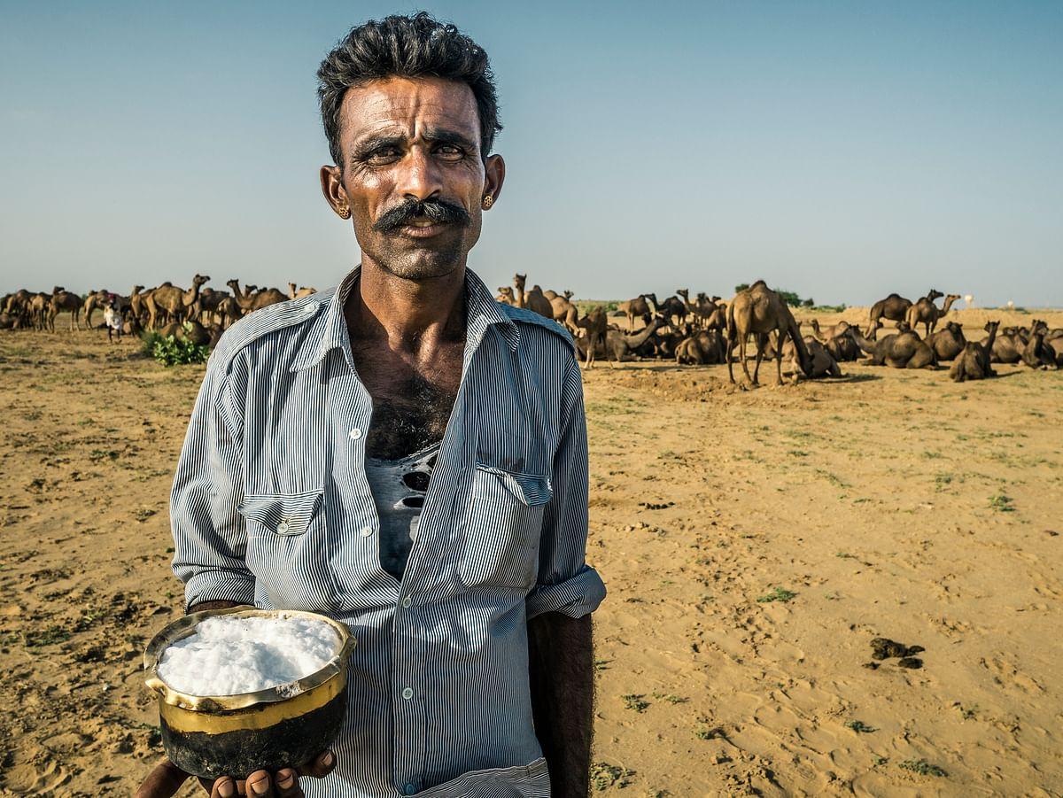 Camel milk is a powerhouse of health benefits.