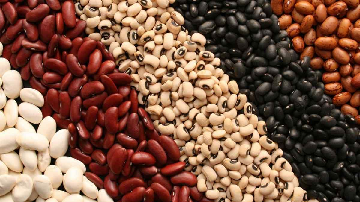 Lectins are great. Why would you go for a diet that is free of them?
