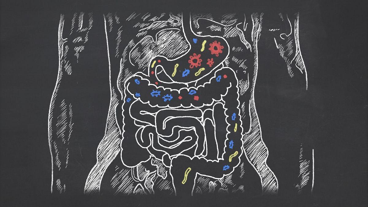 Gut Bacteria May Help Reverse Food Allergies: Study