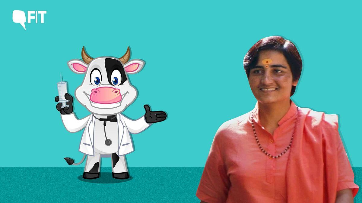 Sadhvi Pragya Says Cow Urine  Cures Cancer. Here's a Fact Check