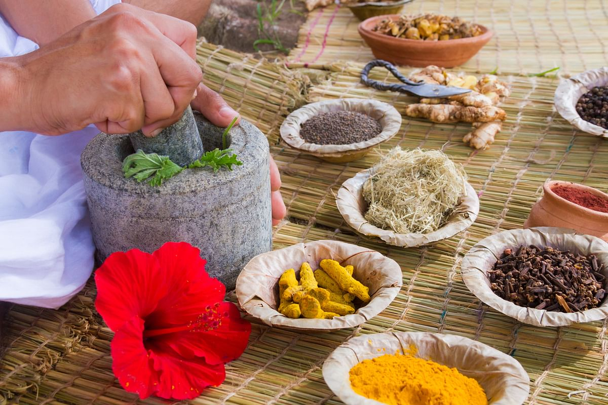 In Ayurveda, kutki is prescribed to improve appetite and to treat jaundice or bile disorders.