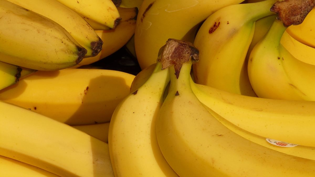 Bananas are rich sources of magnesium.