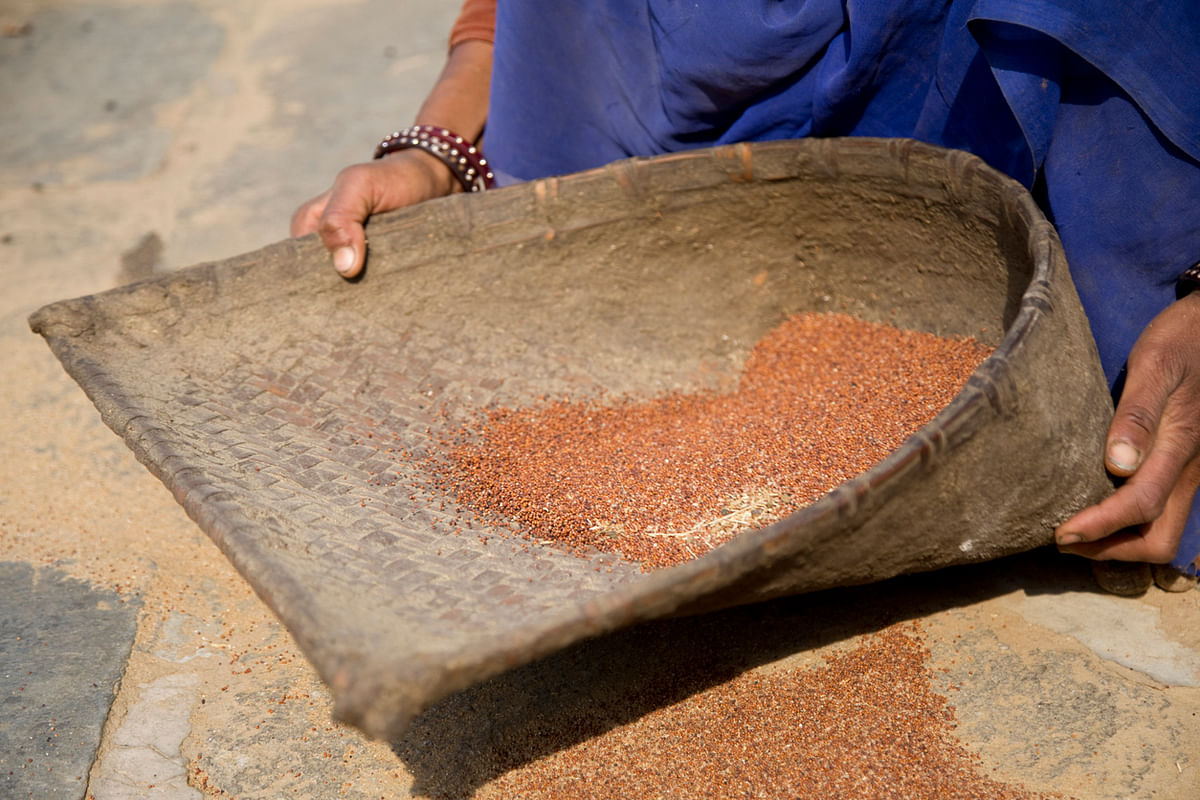 As droughts continue to leave farmers stricken in states across India, millets offer the possibility of relief.