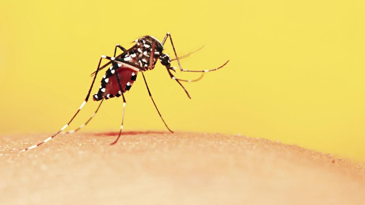 A slight rise in temperature may increase the risk of malaria to hundreds of thousands, in areas that are currently too cold.
