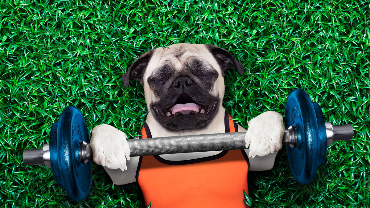 On average, overweight dogs live 1.3 years less than dogs on restrictive diets.