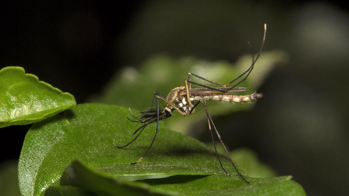 Fear of Dengue Outbreak Looming in Waterlogged Patna