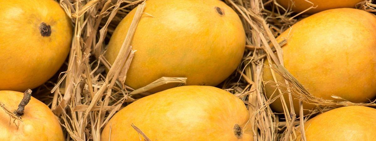 Emirates SkyCargo Lifts Record Volumes of Mangoes  from Mumbai