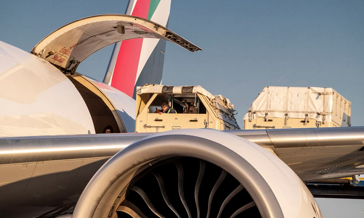 Emirates SkyCargo in Record Horse Haul for Equestrian Games