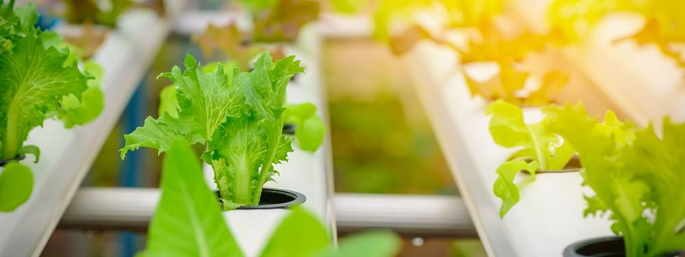 Emirates to Build World's Largest Vertical Farm