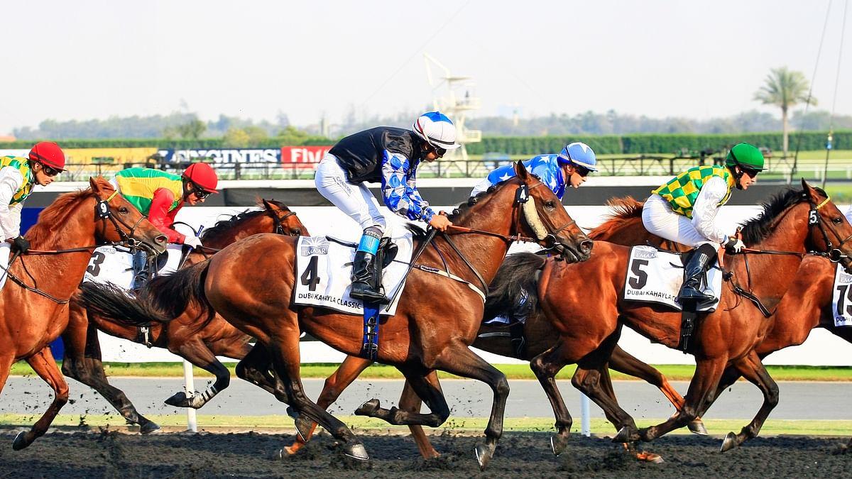 Turkish Cargo Flies Horses to Istanbul and Dubai