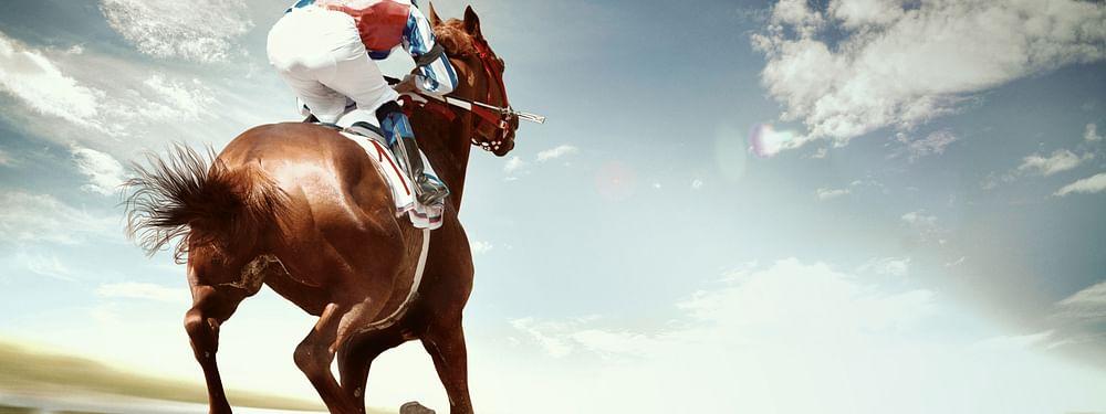 Etihad 'SkyStables' Secures Major Equestrian Contract