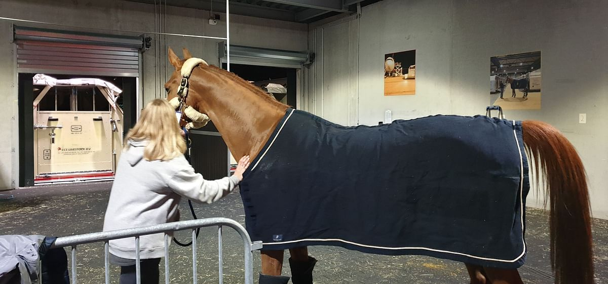 Champion Horses Check-in to Experience Emirates Equine