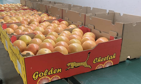 Maersk Offers Integrated Cold Chain for Pakistani Citrus Exporters