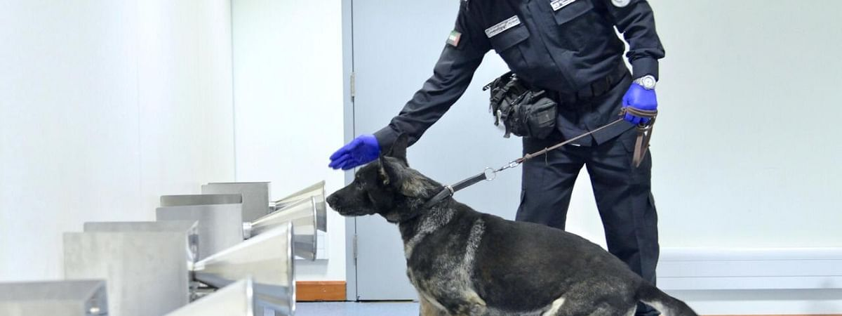 Watch: Police Dogs Used to Detect Covid-19 Cases at UAE Airports