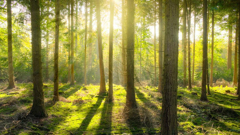 DP World Joins Prince William's Global 'Earthshot' Environmental Push