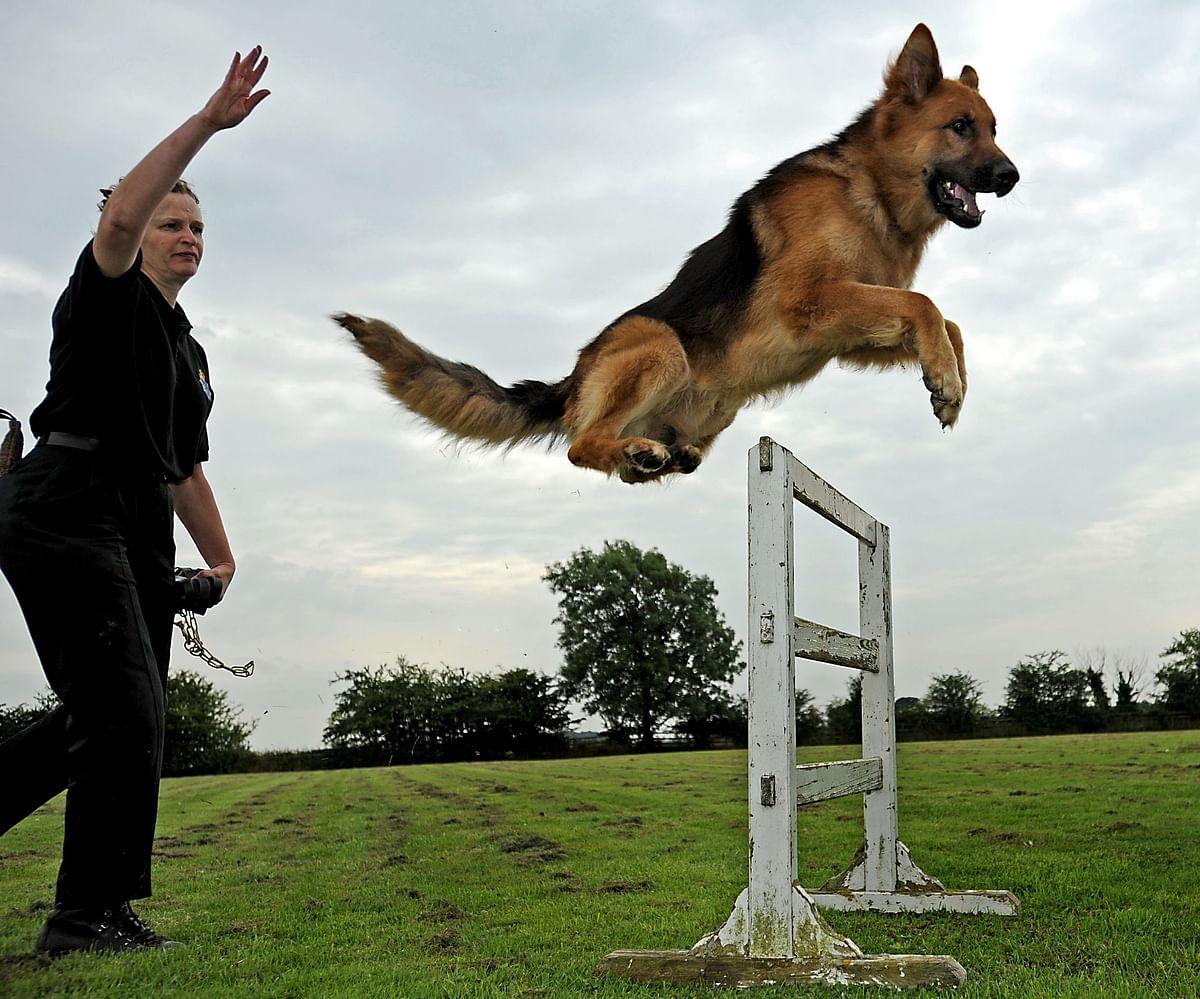 डॉग ट्रेनर (Dog Trainer)