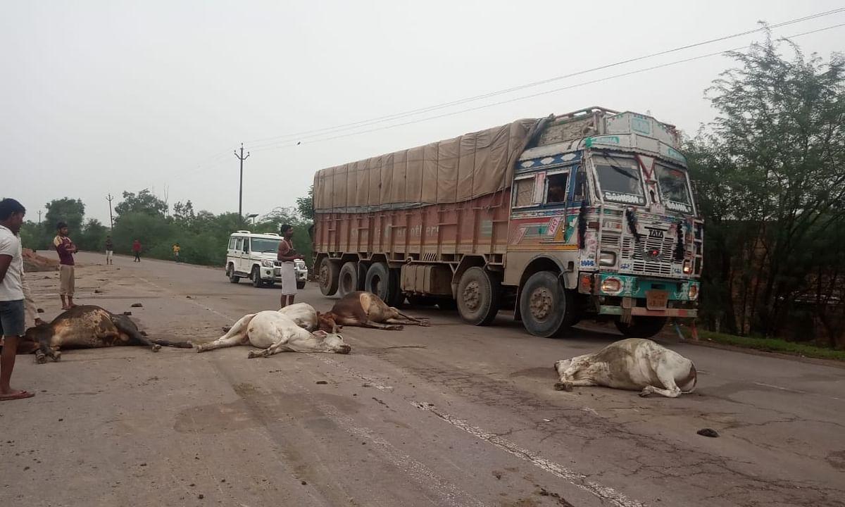 तेज रफ्तार ट्रक ने सड़क पर खड़ी गायों को कुचला, थम नहीं रहा रफ्तार का कहर