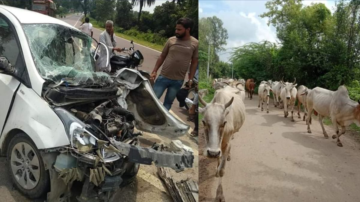 Accidents due to stray animal<a><br><br></a>