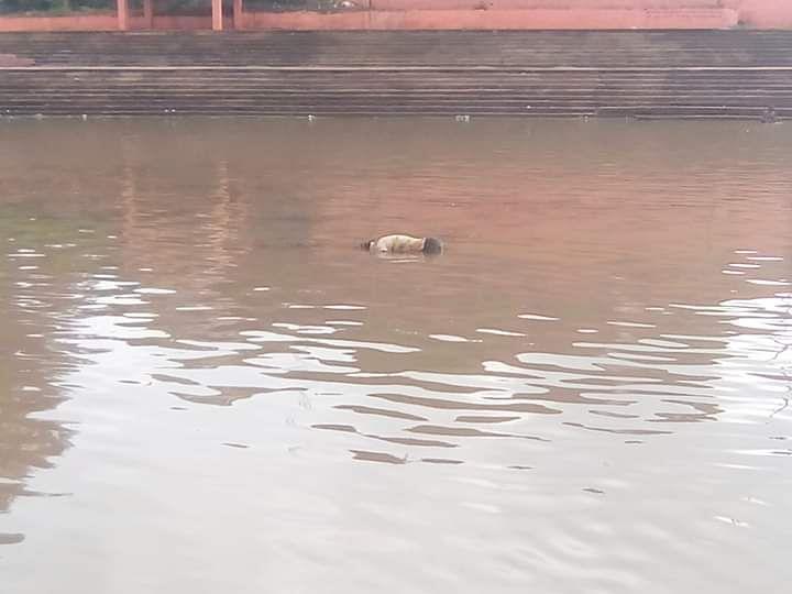 नदी में पड़ा शव