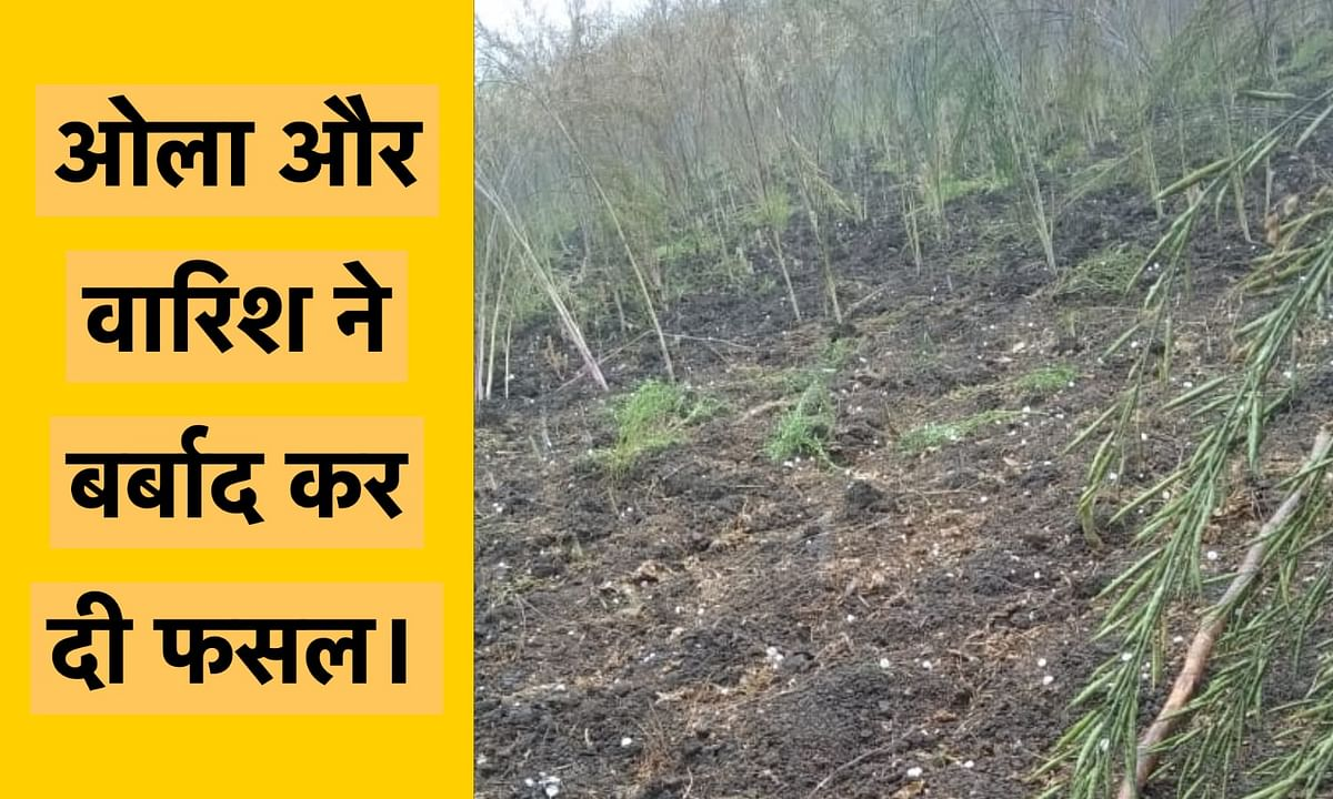 ओलावृष्टी ने तोड़ा किसानों का हौसला, बाँदा जिले के किसानों में मचा हाहाकार।