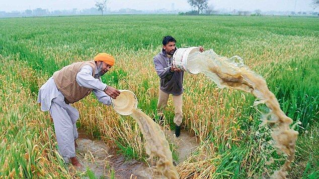 Rain spoiled crops