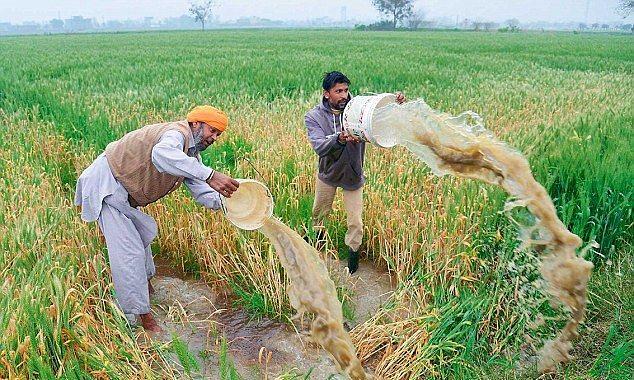 बुंदेलखंड में हुई बरसात ने किसानों की उम्मीदों पर पानी फेरा।