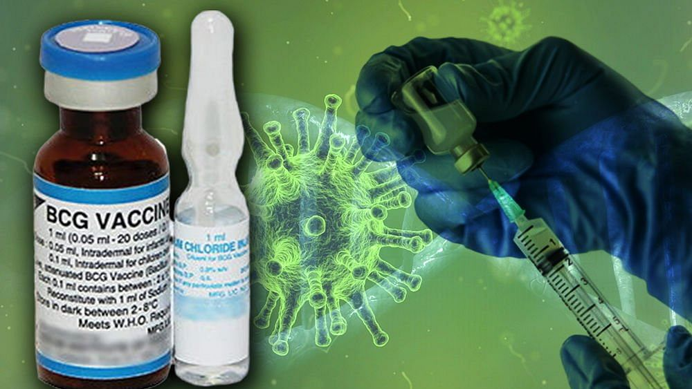 BCG vaccine against coronavirus