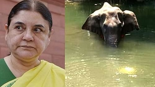 Pregnant elephant killing in kerala